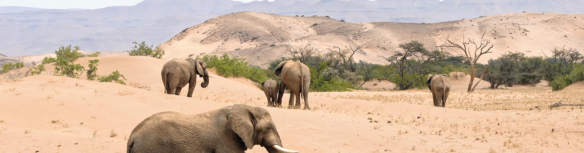 visite plaine africaine animaux liberte elephant